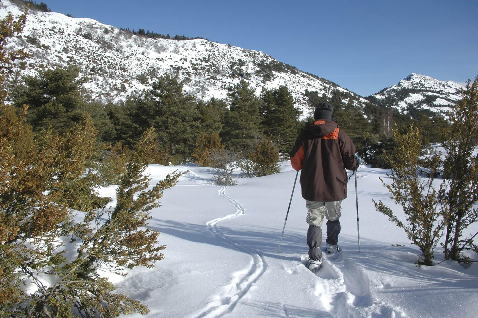 Safari guidato con racchette da neve