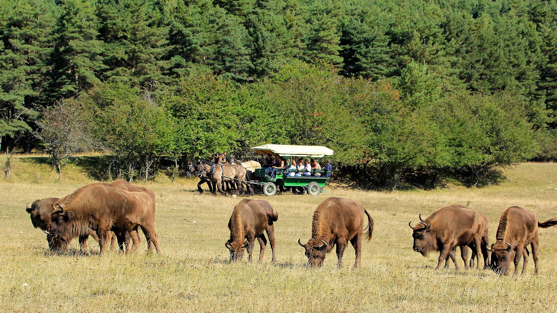 Safari guidato in carrozza trainata da cavalli