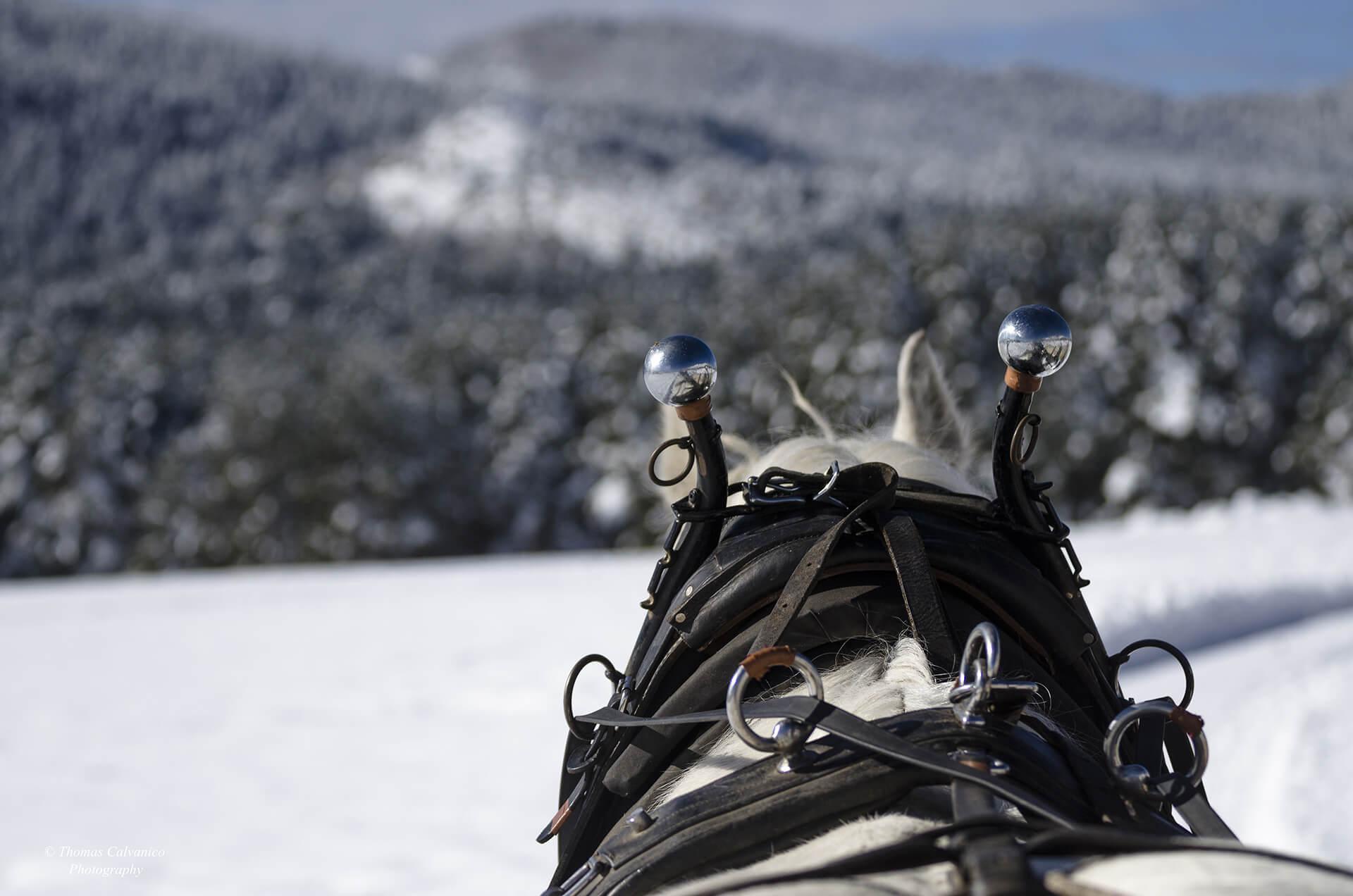 Safari guidato in slitta